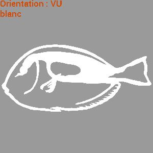 poisson-chirurgien-zlook-peche-mer