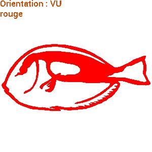 sticker-poisson-chirurgien-en-pleine-mer-zlook-marin