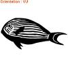 Un autocollant en vinyle adhésif permet une déco de poisson sympa, contactez Zlook.