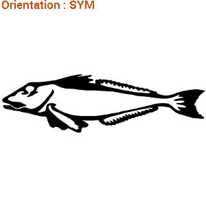 Offrir un cadeau : poisson de mer autocollant pour décorer.