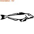 Les stickers ZLook sont à thème poissons de mer.