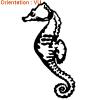 sticker-hippocampe-autocollant-poisson-de-mer