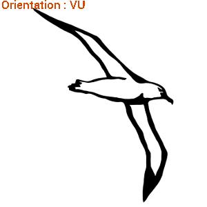 Albatros en vol figé sur une image adhésive par atomisticker.