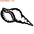 La conque (autocollant adhésif de zlook) est un coquillage.