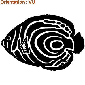 Beau spécimen de poisson empereur en sticker avec zlook.
