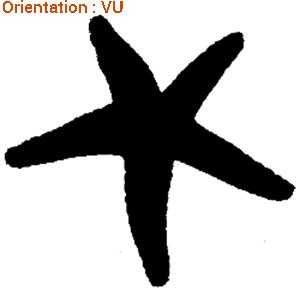 L'adhésif étoile de mer d'atomistickers est dispo en 14 couelurs.