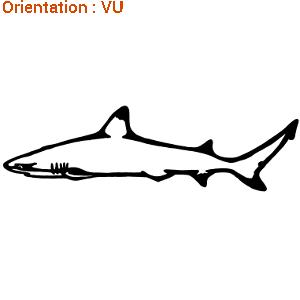 Le sticker requin pointe noire de zlook est acheter en ligne.