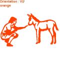 Curieuse rencontre entre un ânon et une femme (zlook amour)